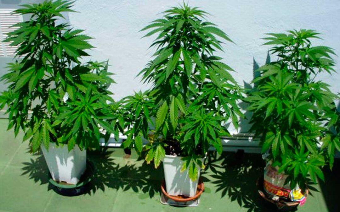 En Santa Fe dieron media sanción a proyecto para cultivar Cannabis Sativa con fines terapéuticos