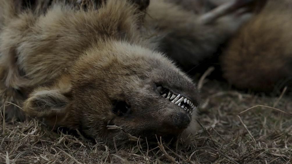 Desastre ecológico y mortandad casi total de la fauna causó quema de pastizales en el Delta del Paraná