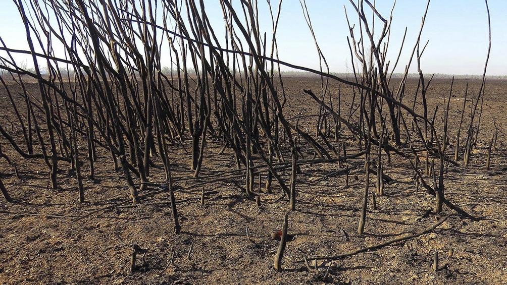 Desastre ecológico: Unas 300 mil hectáreas de los Humedales del Paraná arrasadas por los incendios