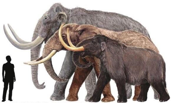 Duda acuciante: 'Desextinguir especies o conservar las vivas'