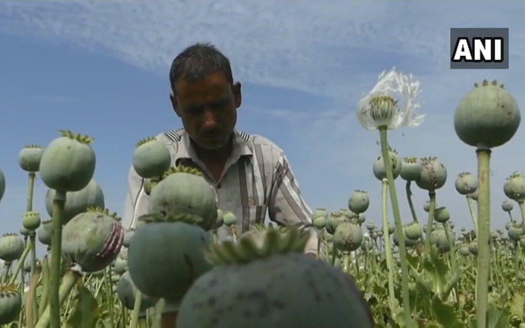 La más grande pileta de opio de Neeemuch