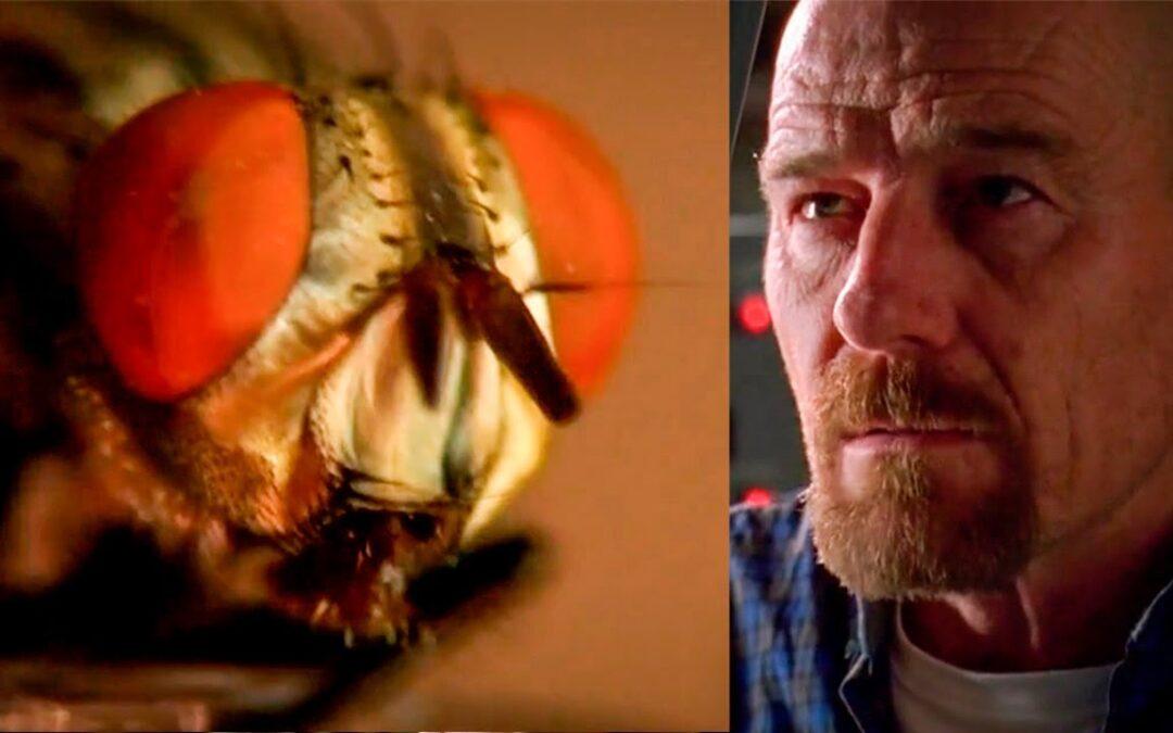 Humanos y moscas tienen más en común de lo que podría parecer