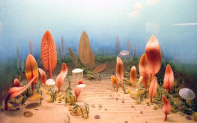 Indagan acerca de los orígenes de criaturas precámbricas